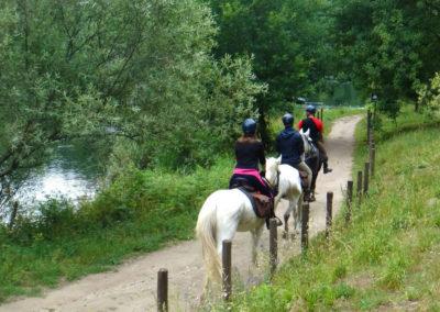 cavalos-1