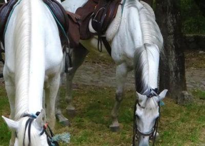 cavalos-2
