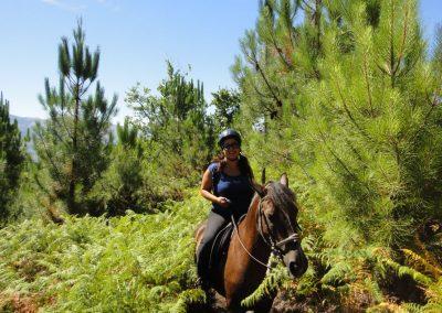 cavalos-5